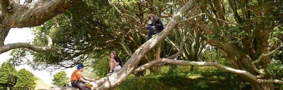 Tree consciousness